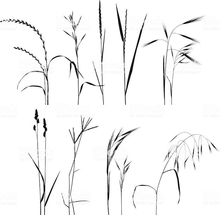 grass collection  collection graphism grass  gras