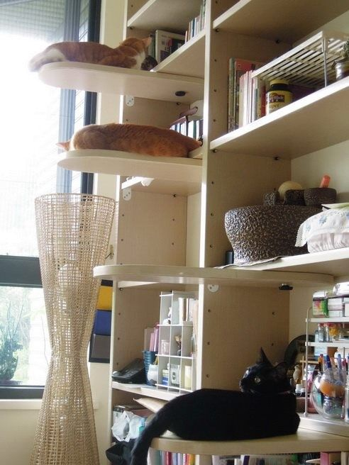 594 best images about cat climbs via stairs shelves cubes for Bookshelf cat tower