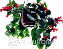 Big Promocja! 50 sztuk Goldfish Chlorophytum Nasion Bonsai Wchłonąć Formaldehydu Rośliny Wieloletnie Rośliny Doniczkowe Pomieszczeniach Zakładów oczyszczania Powietrza(China (Mainland))