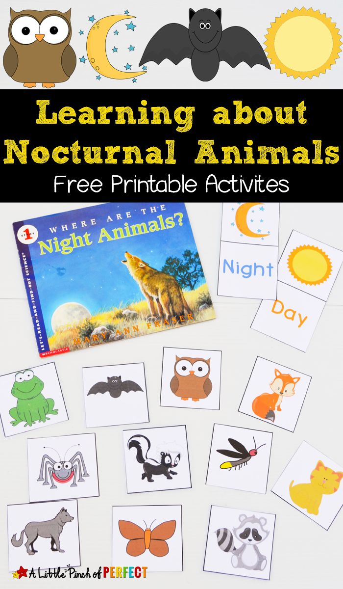 FREE Nocturnal Animals Printables a great resources for learning all about these amazing creatures! Perfect for preschoolers!