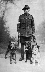 The British War Dog School at Shoeburyness continued to train and send out dogs (Airedale) not only to France and Belgium but also for use as guards and sentries on the home front, as well as in Salonika.  Dogs for the Richardsons' school came from Battersea Dogs' Home (then known as the Home for Lost Dogs at Battersea) and, as demand increased, from other dogs' homes in Manchester, Birmingham, Liverpool and Bristol.