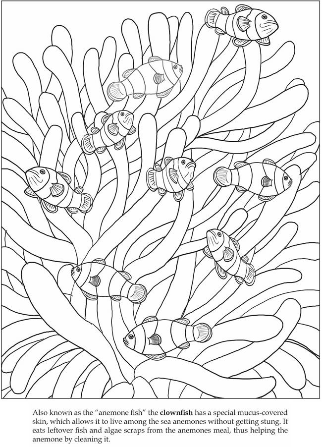 Welcome to Dover Publications Let's Explore! Sea Animals: Sticker Coloring Book  clownfish
