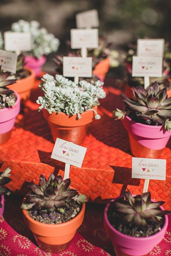 Succulents as wedding favors in tiny pots.