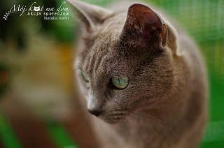 Mój kot ma dom - Akcja społeczna: V.017