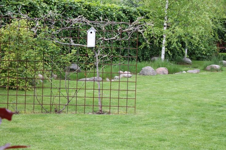 Del græsplænen, med ét armeringsnet (10 mm kan stå selv) her er der plantet en blåregn og en klatrerose på, i sommeren bliver den en grøn blomstrende væg, og bruder en stor græsplæne