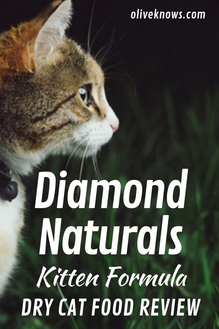 Diamond Naturals Kitten Formula Dry Cat Food Review Oliveknows Cat Food Reviews Kitten Formula Dry Cat Food