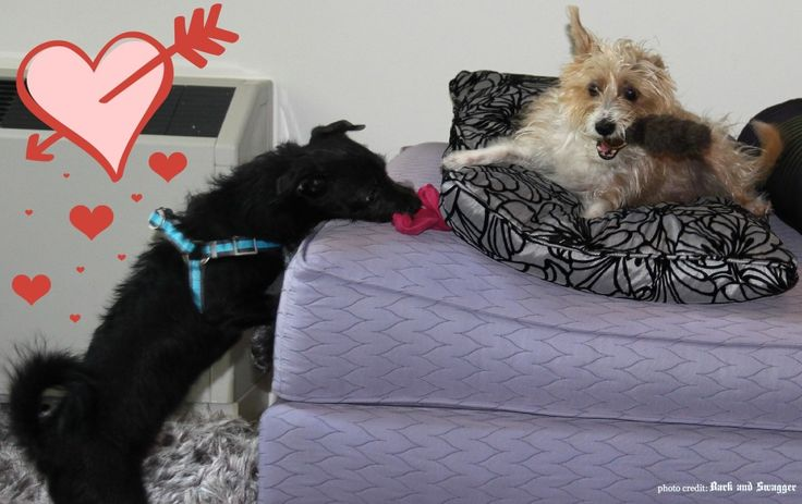 It's National Best Friends Day. It's also Sophie's first day with Jasper. I see a budding bestie in their future, don't you? http://barkandswagger.com/national-best-friends-day-sophie-jasper