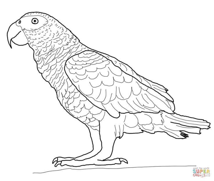 Afrikaanse grijze papegaai | Super Coloring