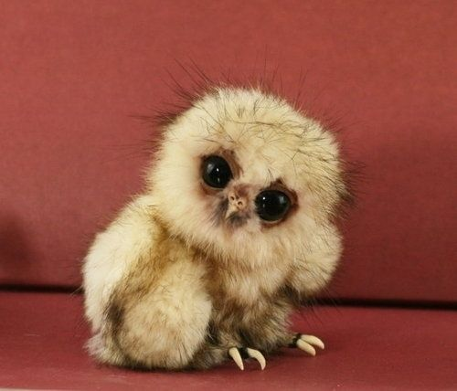 It's just so... odd. And cute. Owls are odd and cute even when big, but this...