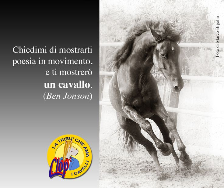 #poesia e #cavalli