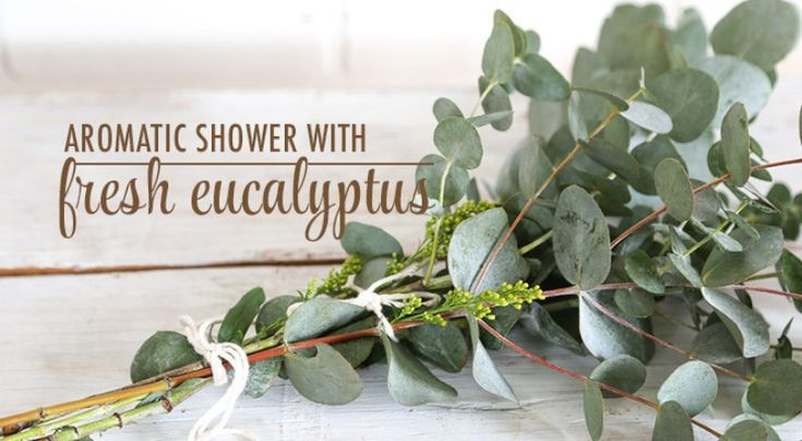 Aromatic shower