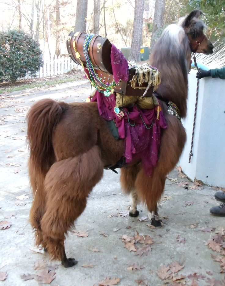 Best 236 Llama Images On Pinterest Other