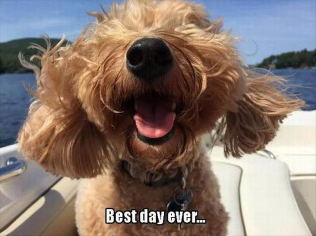 36 Funny Pics of Dogs -           (adsbygoogle = window.adsbygoogle || []).push({});              (adsbygoogle = window.adsbygoogle || []).push({});