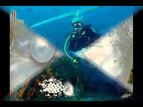 A Gyöngyhalász-Zárai Márta - Vámosi János