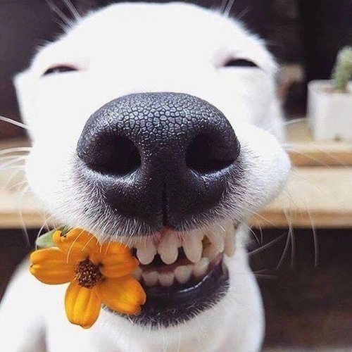 Look at this happy dog!