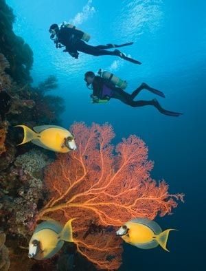 I get that the exciting thing about scuba is every time you dive you don't know what you will experience, but isn't that also the very reason you might suddenly be scared out of your mind in a foreign environment ?