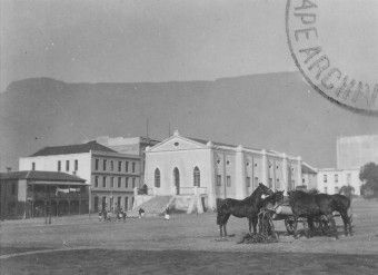 feeding-horses-riebeeck-square-cape-town