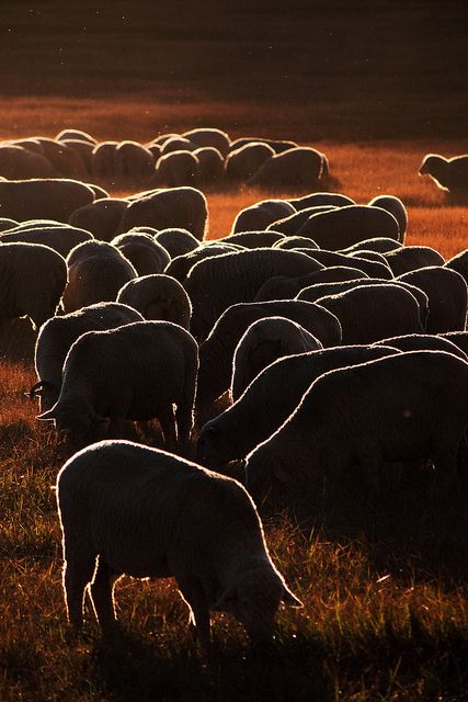 It occured to me when I saw this picture- we look like  bunch a sheep to one leader - and so we are.  Someone should tell him- we have a mighty, mighty Shepherd!