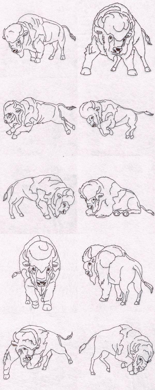 Mejores 11 imágenes de Bison en Pinterest   Animales, Libros para ...