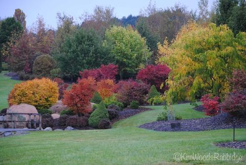 Love the use of coloured foliage here in this garden  Mayfield Garden, Oberon, New South Wales
