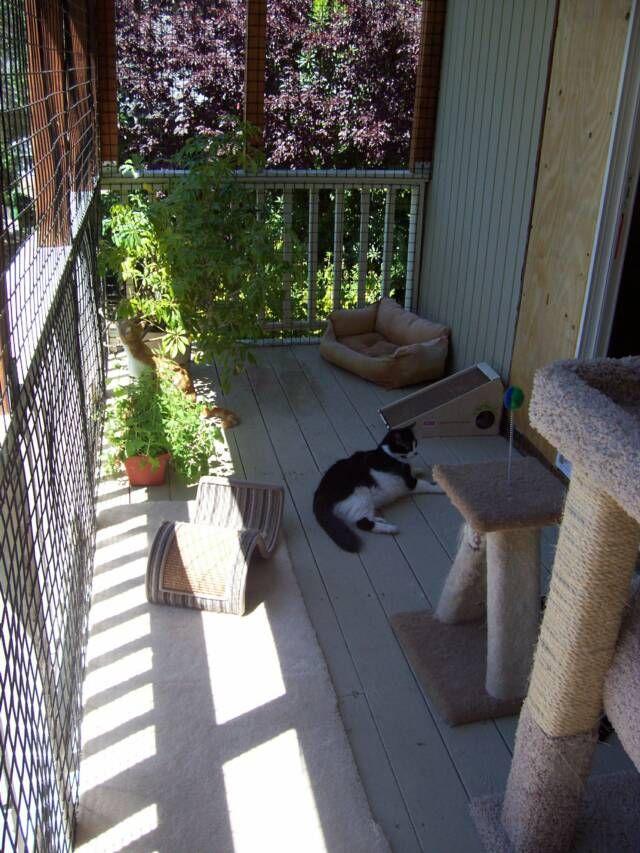 89 best catio ideas images on pinterest | cat furniture, cat stuff ... - Cat Patio Ideas