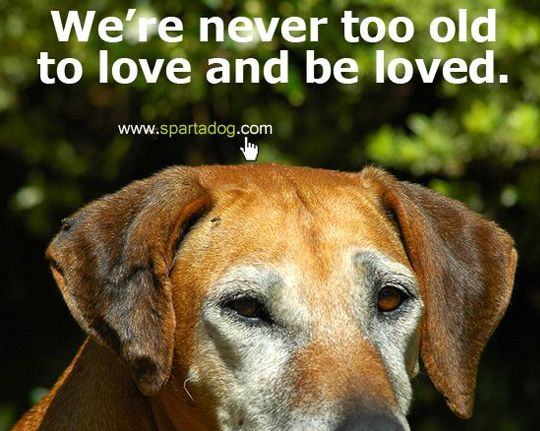 26 Dog Quotes About Love And Compassion - SpartaDog Blog