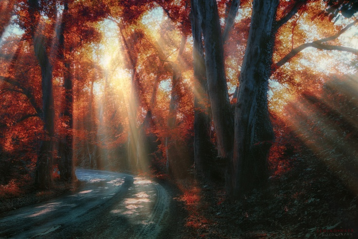 By photographer Ildiko Neer