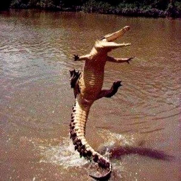 The Gators seem very excited about the FSU game today--should be a good one!