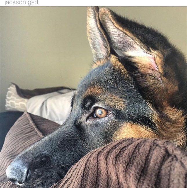 GSD-Jackson ` Lost in thoughts ` Beautiful !