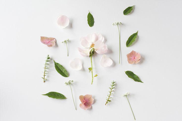 glacon-fleuris-parfumes01.jpg (1200×800)