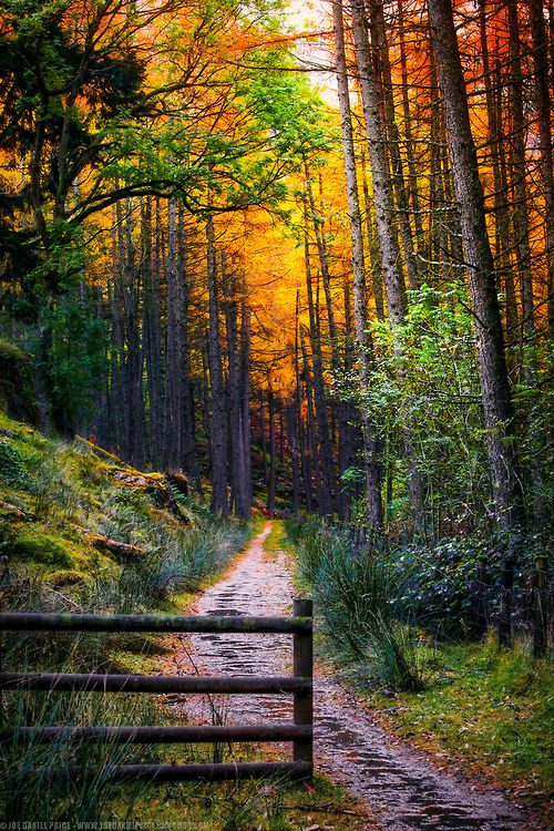 Elan Valley, Rhayader, Wales