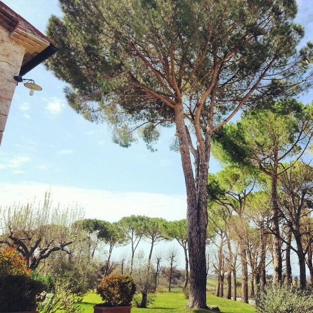 #toscana #cowinningacquaviva #igerstoscana #instatoscana #maremmans