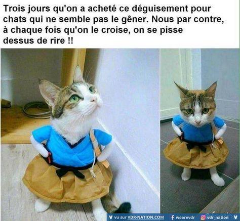 Mdr on croirais vraiment à un chat en robe sur 2 pattes