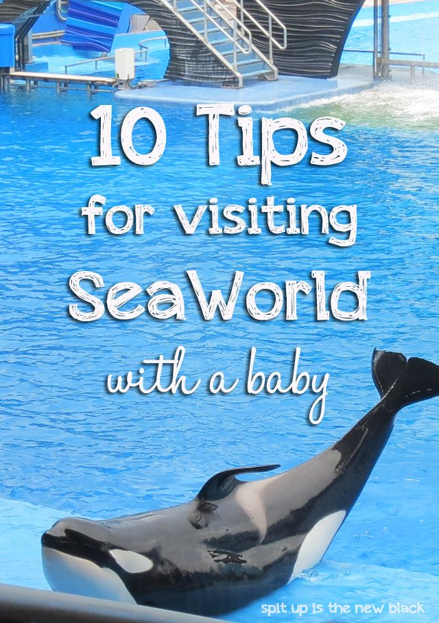 10 Tips for Visiting SeaWorld Orlando with a Baby - Spit Up is the New Black