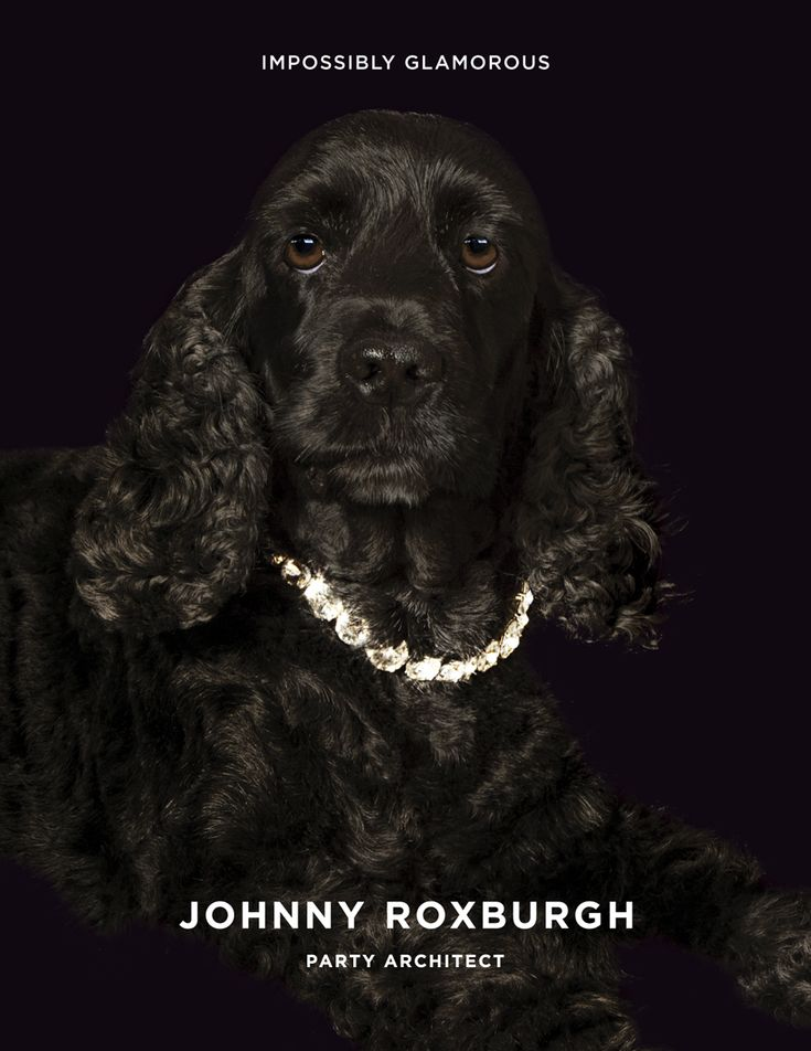 Branding and ad campaign for UK party planner Johnny Roxburgh by graphic design studio Bunch