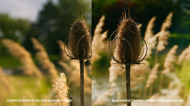 Canon 5D mark III RAW vs. Blackmagic Cinema Camera RAW by cinema5D. See the related article on cinema5D: