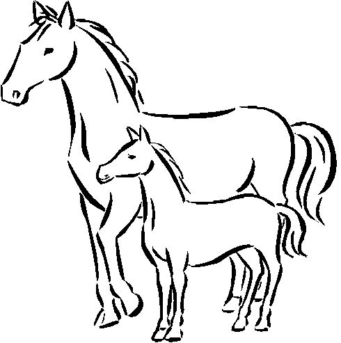 baby horses coloring pages coloring pages Pinterest