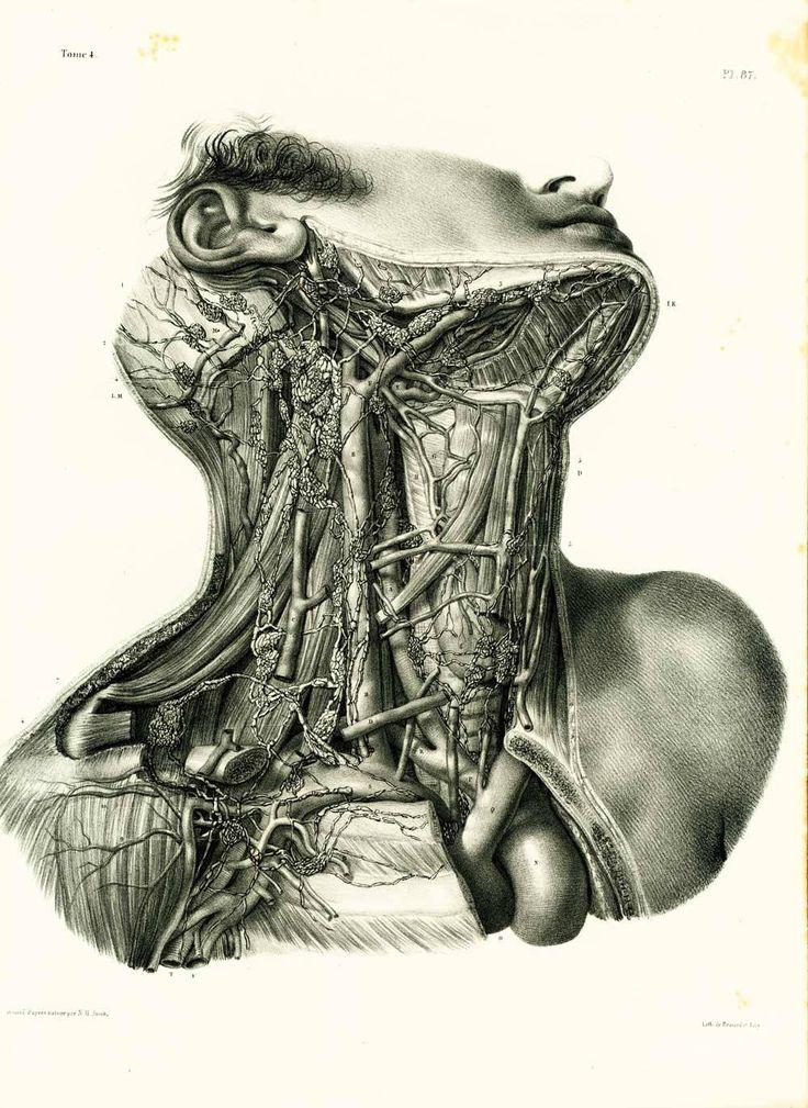 1836 Vaisseaux Ganglions lymphatiques Cou Planche Anatomique Bourgery, Poster Anatomie Medecine de la boutique sofrenchvintage sur Etsy