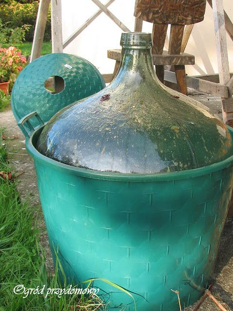 Ogród przydomowy, winogranie, produkcja wina