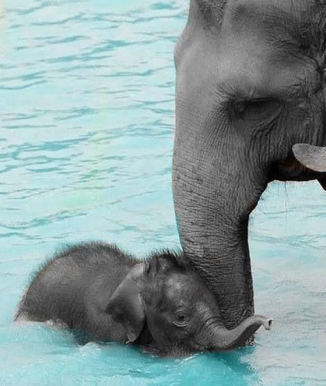 baby elephant OMG MY BESTIE PINNED THIS  SOOOOOOO CUTE