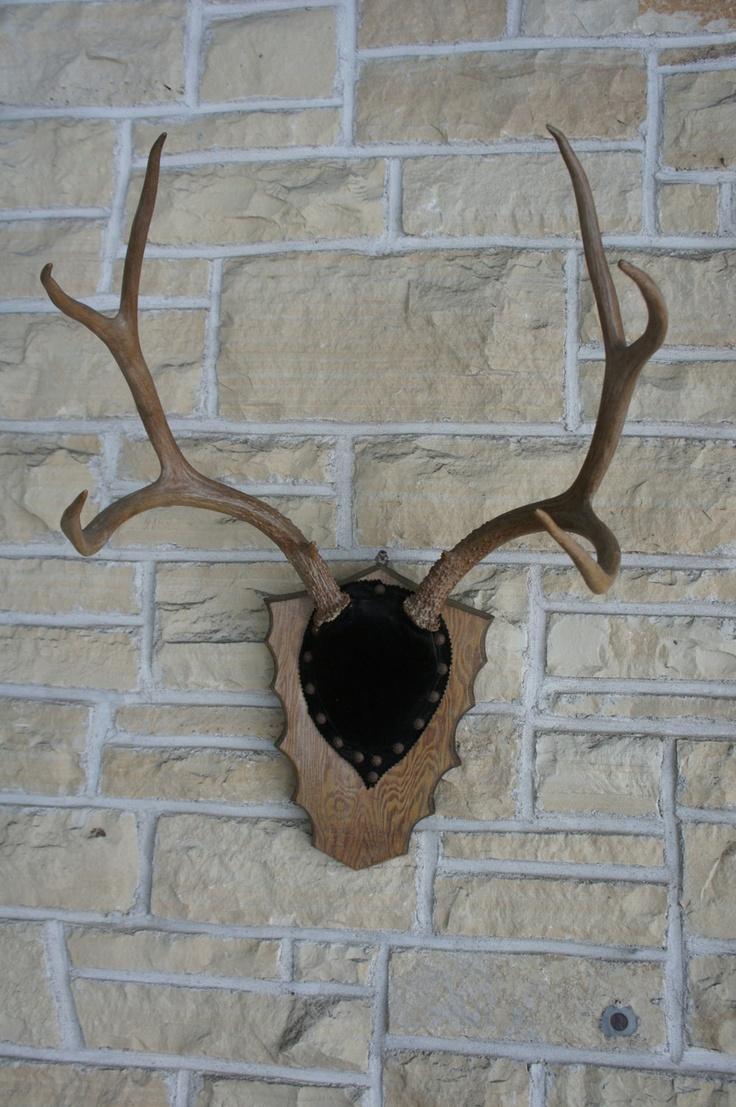 Deer antler mounting kit instructions - Vintage Mule Deer Antler Mount 1964 Wyoming Unique Wall Decor Brown Velvet Beach House 125 00