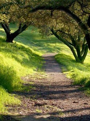 Westwood HIlls Park - Locals enjoy huge oaks, easy trails and tranquility at this natural preserve within the Napa city limits