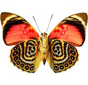 Butterfly PNG Images On this site you can download free Butterfly PNG image with transparent background.