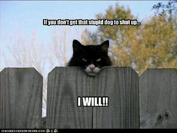 20 SUPER FUNNY ANIMAL PICTURES