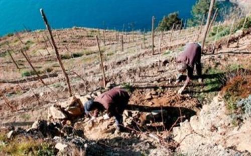 Territorio | Casa vinicola Criserà