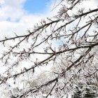 Bloeiende bomen OVER WINTERBLOEIERS