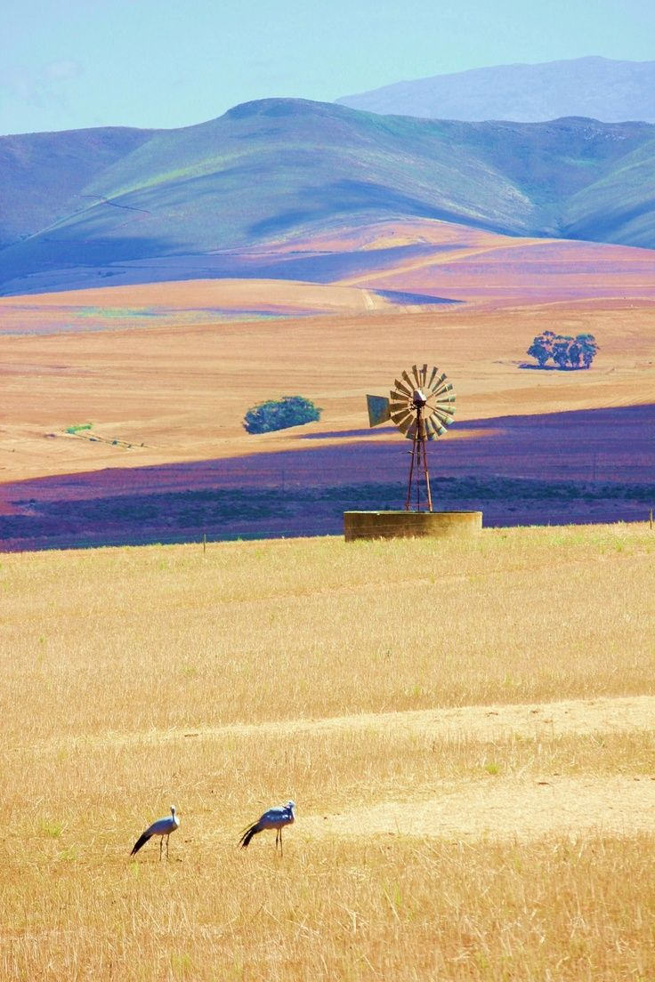 Wheatfields near Bredasdorp, Western Cape, South Africa