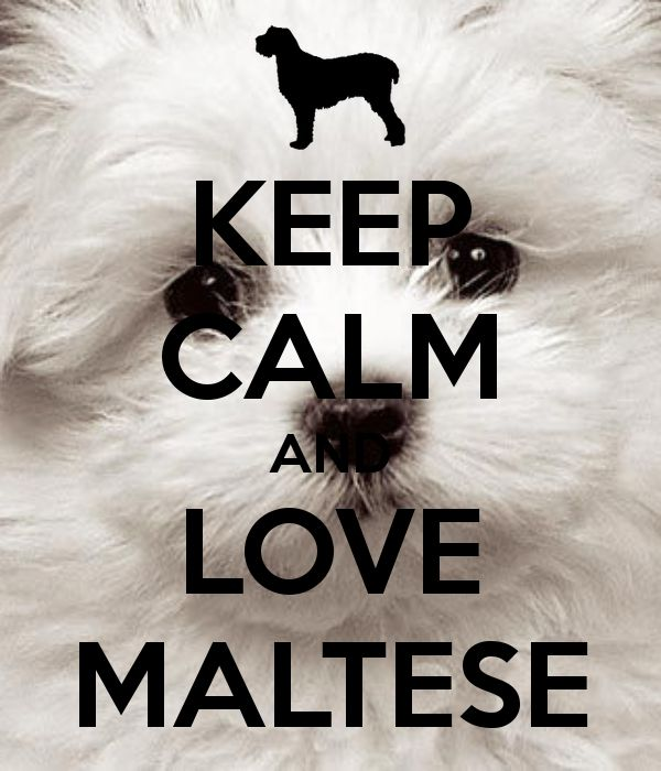 KEEP CALM AND LOVE MALTESE