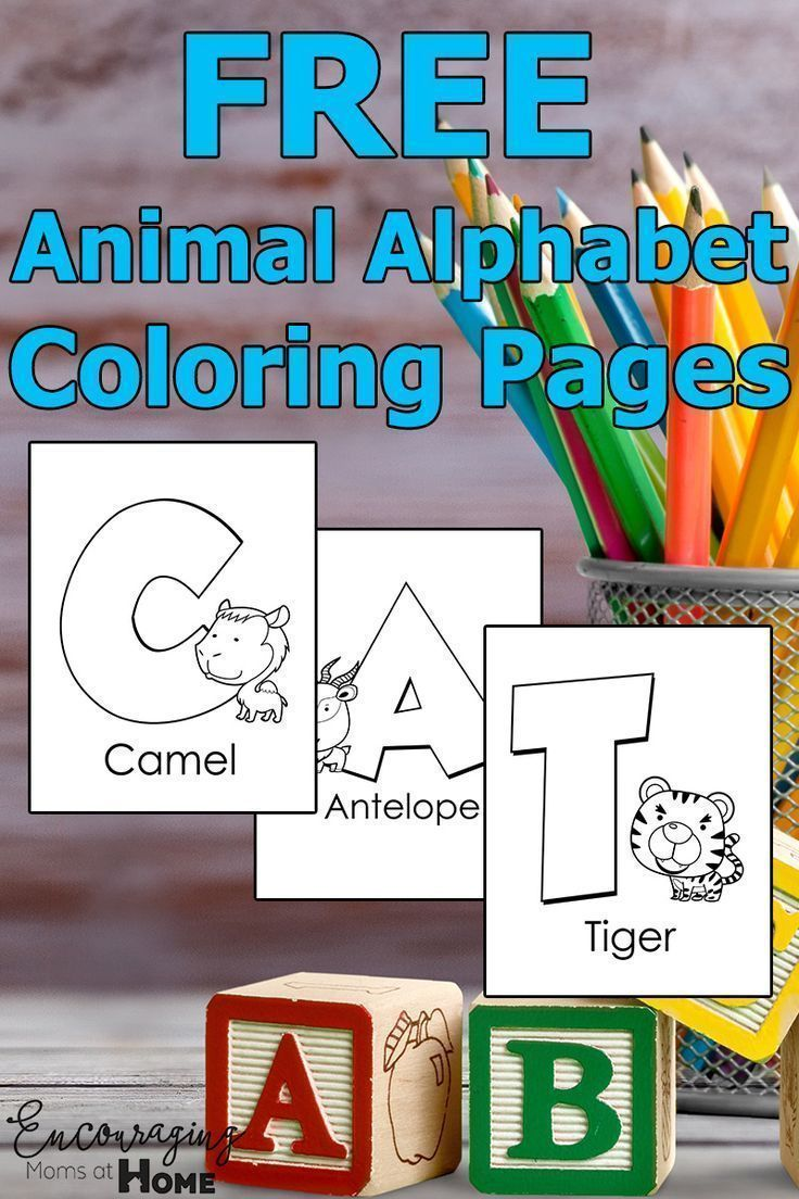 98874 best Ultimate Homeschool Board images on Pinterest ...