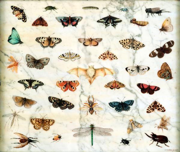 jan van kessel il vecchio-studi di farfalle e altri insetti-1659-olio su marmo